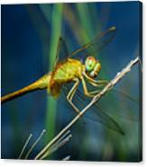 Dragonflies, Insects, Animals, Nature Canvas Print