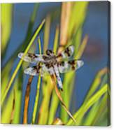 Dragonfly Perched By Pond Canvas Print
