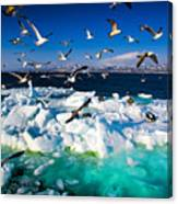 Drift Ice Canvas Print