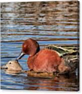 Ducky Delight Canvas Print