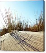Dune Grass On A Sand Dune At The Beach Canvas Print