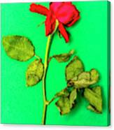 Dying Flower Against A Green Background Canvas Print