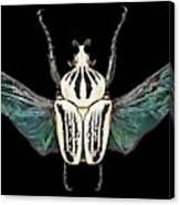 Eastern Goliath Beetle Canvas Print