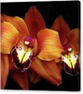 Orange Cimbidium Orchid Canvas Print