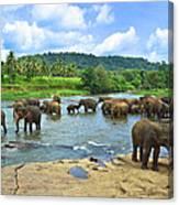 Elephants Bathing In River Canvas Print
