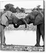 Elephants Curling Trunk Canvas Print