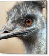 Emu Print 9092 Canvas Print