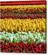 Endless Beautiful Tulip Fields Canvas Print