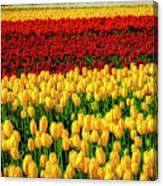 Endless Tulip Fields Canvas Print