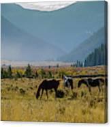 Equine Valley Canvas Print
