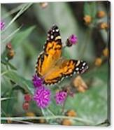 Equinox Butterfly  Canvas Print