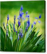 Essense Of Spring Canvas Print