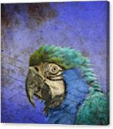 Blue Exotic Parrot- Pirates Of The Caribbean Canvas Print
