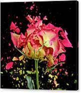 Exploding Rose Canvas Print