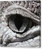 Eye Of Alligator Canvas Print
