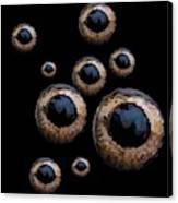 Eyes Have It Black Canvas Print