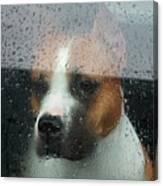 Faithful Dog Sitting In A Car And Canvas Print