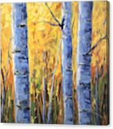 Fall Aspen Iv Canvas Print