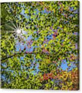 Fall Beginnings Canvas Print