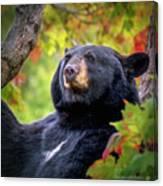 Fall Black Bear Canvas Print