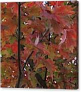 Fall Collage Canvas Print