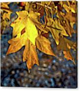 Fall Has Sprung Canvas Print