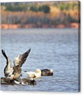 Fall Migration At Whittlesey Creek Canvas Print
