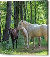 Family Of Horses Canvas Print