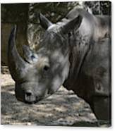 Fantastic Profile Of A Rhino With A Long Horn Canvas Print