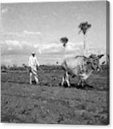 Farmer Plowes Field Canvas Print