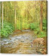 Fawn Drinking From Stream Canvas Print