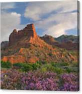 Feather Dalea, Caprock Canyons State Canvas Print