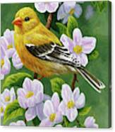 Female American Goldfinch And Apple Blossoms Canvas Print