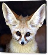 Fennec Fox Canvas Print