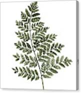 Fern Twig Illustration Grey Plant Watercolor Painting Canvas Print