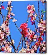 Pinks And Blues Canvas Print