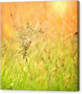 Field Sparrow Canvas Print