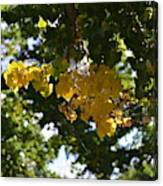 First Golden Leaves Canvas Print
