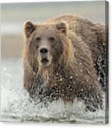Fish Coastal Brown Bear Of Alaska Canvas Print