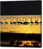 Flamingos At Dawn Canvas Print