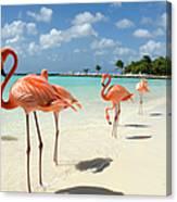 Flamingos On The Beach Canvas Print