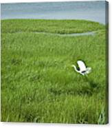 Salt Marsh Flight Canvas Print