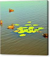 Floating Ducks Canvas Print