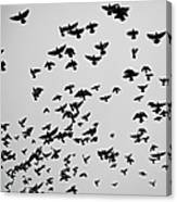 Flock Of Flying Pigeons Canvas Print