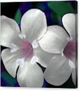 Floral Photo A030119 Canvas Print