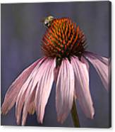 Flower And  Bee Canvas Print