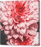 Flower Buds Canvas Print