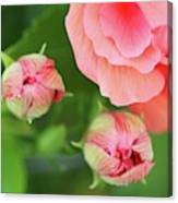 Flower Buds Rising Canvas Print