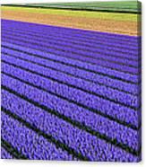 Flower Fields In Spring In Holland Canvas Print