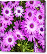Flower Patterns Collection Set 04 Canvas Print